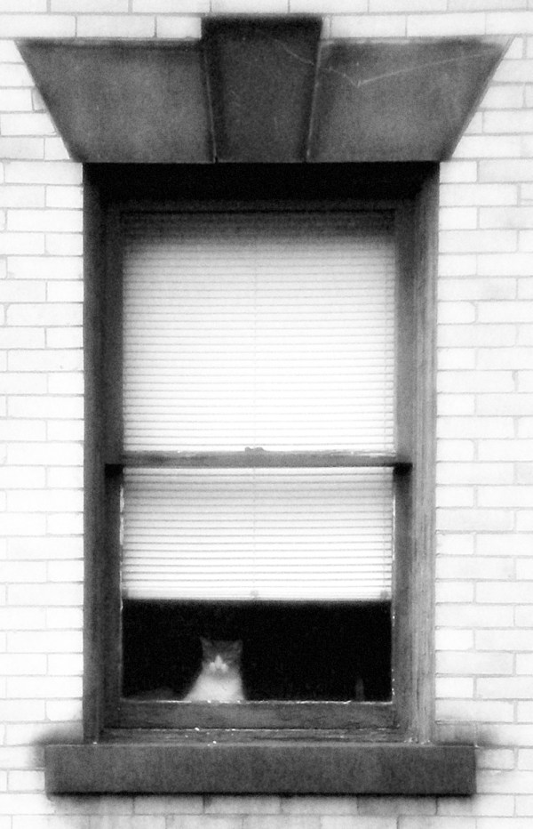 black and white photo of cat in window