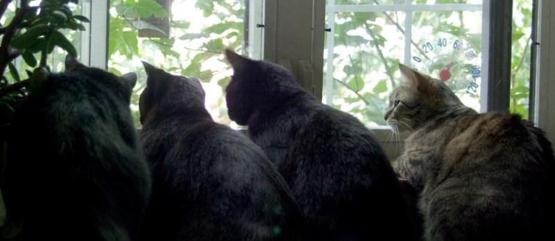 three black cats and tabby cat