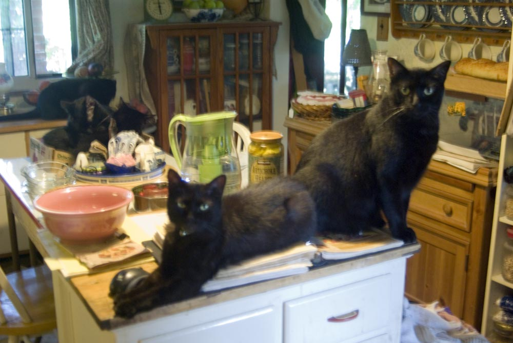 cats in the kitchen tile backsplash ideas daily photo i will now be managing your creative cat