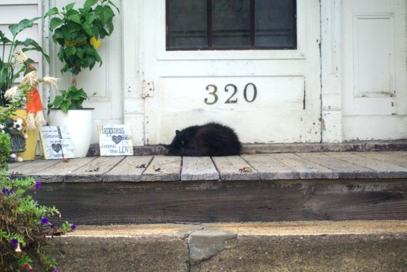 black cat sleeping on porch