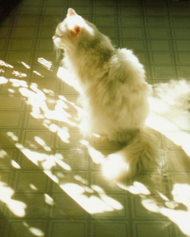 white cat in sun on floor