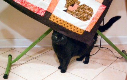 black cat under quilt