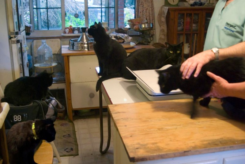 five black cats in exams