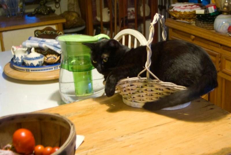 black cat in white basket