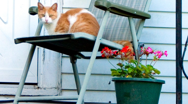 orange and white cat on chair