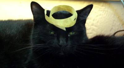 black cat wiht tape on head