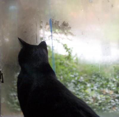 black cat at window