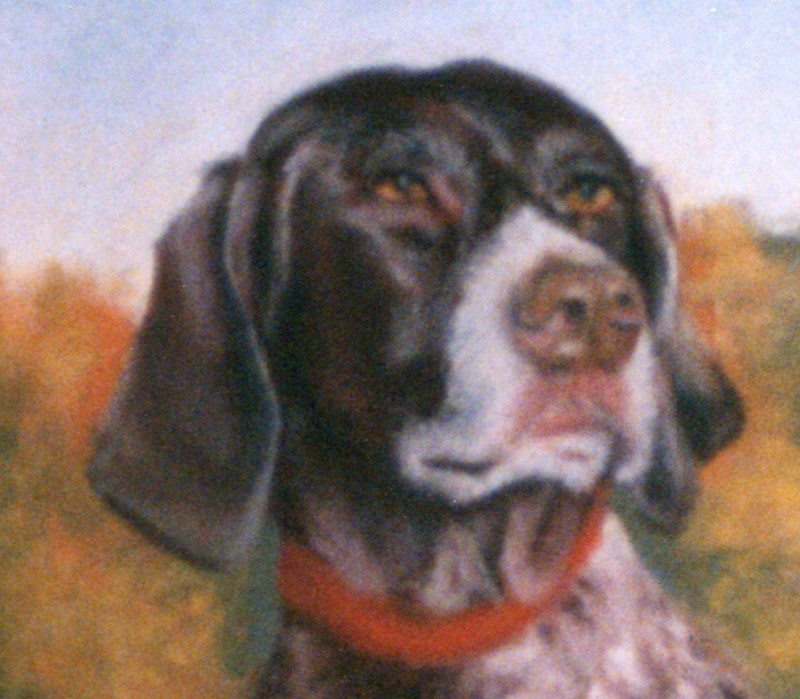 detail of pastel portrait of portrait of german short-haired pointer dog