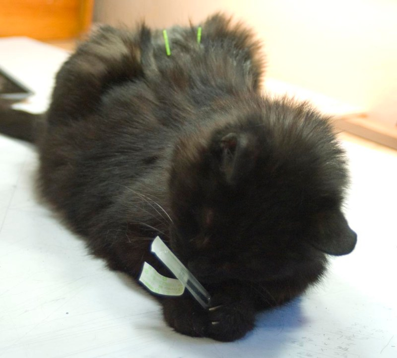 black cat with wrapper