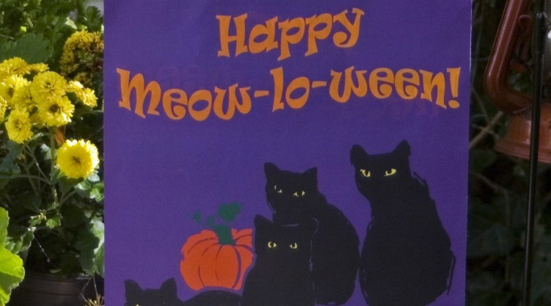 """Happy Meow-lo-ween"" design."