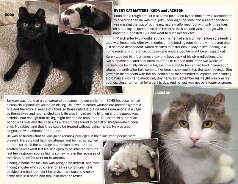 Koda and Jackson's page