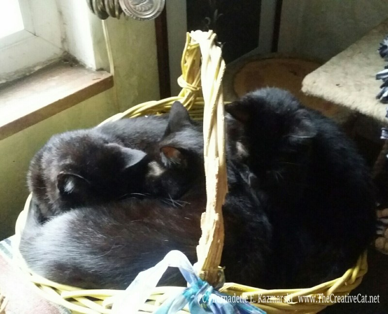 Three brothers in a basket, just right for a rainy day.