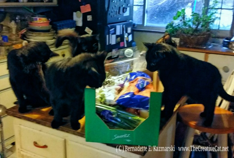 photo of cats and vegetables in box