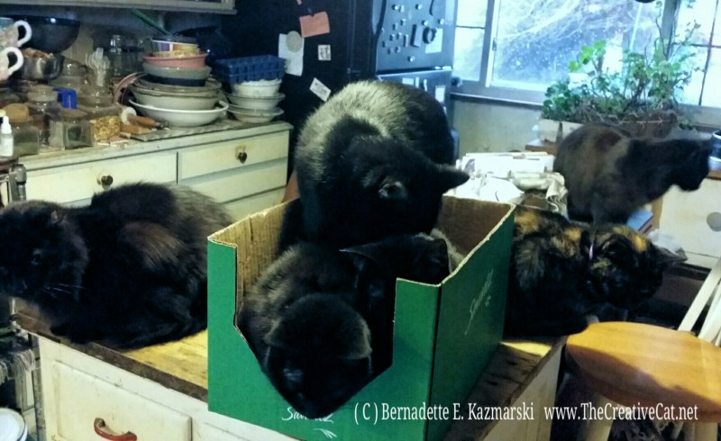 photo of cats in box