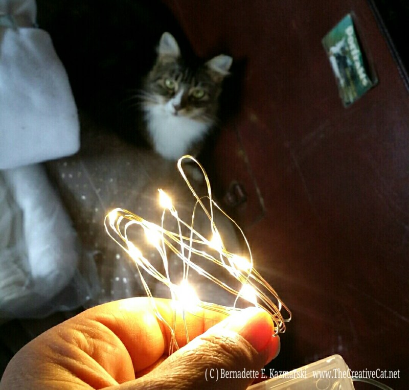 photo of cat looking at holiday lights.