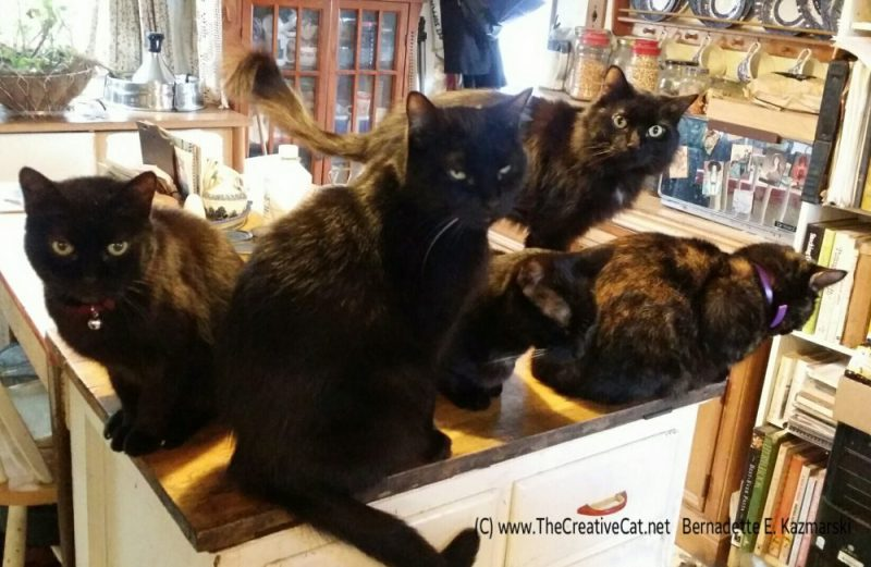 five cats on cabinet