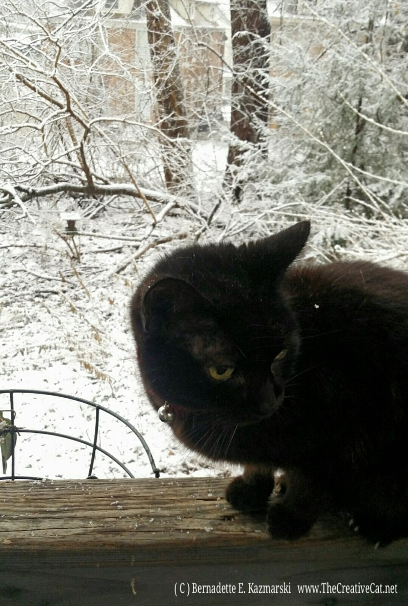 Mimi is not happy about the snow!