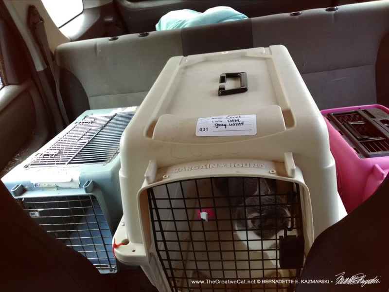 """Each in their own carrier meowing along with """"The Ride of the Valkyries""""."""