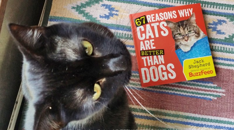 "black cat with ""67 reasons why cats are better than dogs"" by Jack Shepherd"