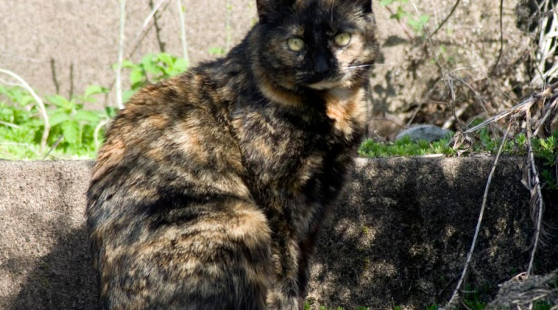 tortoiseshell cat at abandoned house