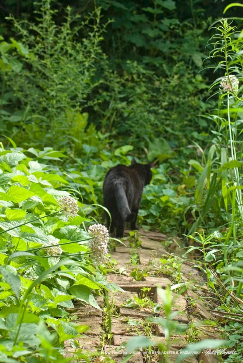 Mimi walks a familiar path.