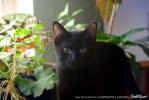black kitten with floweres