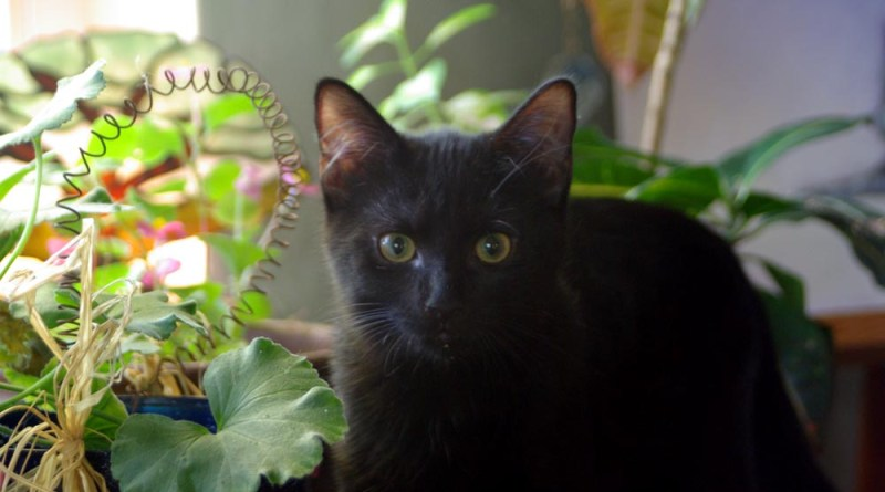 black kitten with floweres