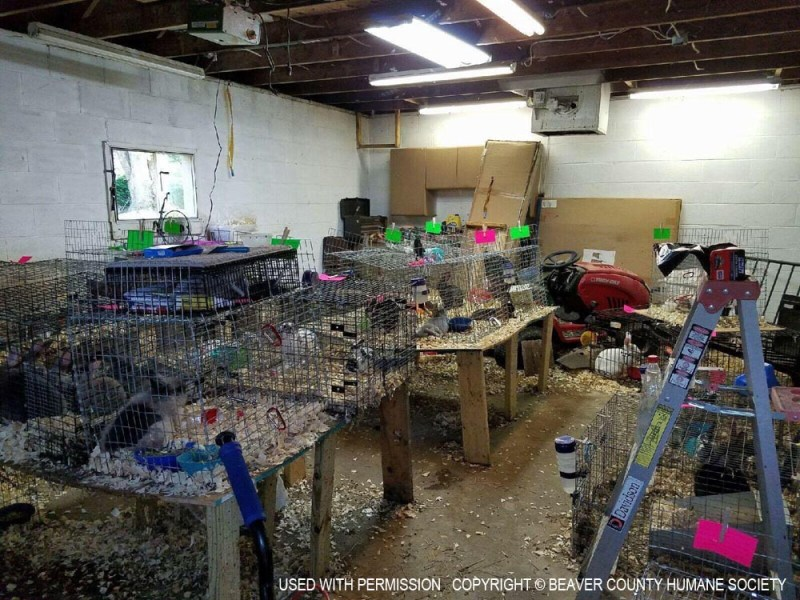 The garage where all the animals were kept.