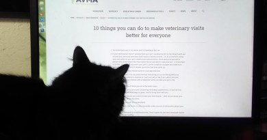 black cat reading computer