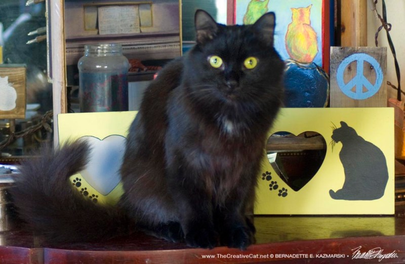 black cat in gift display