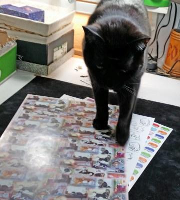 black cat walkding on art papers