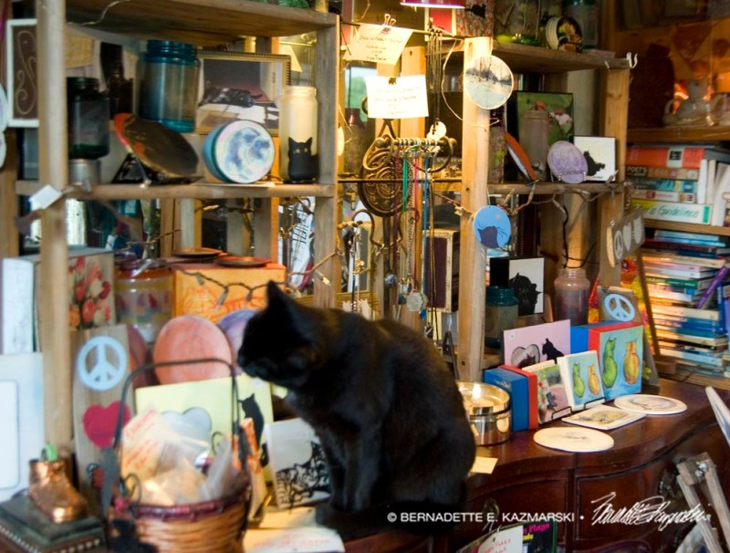 black cat in display