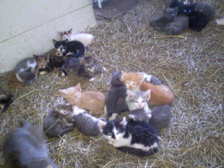 lots of kittens