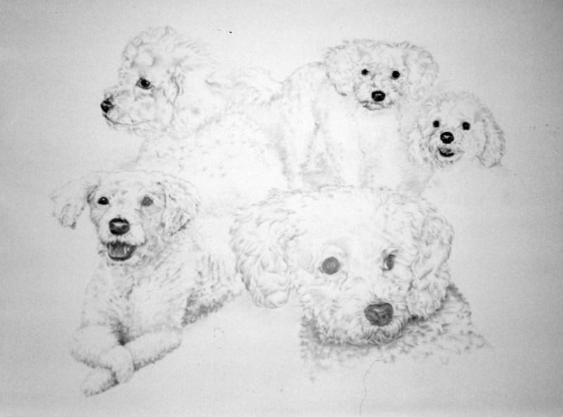 """Belle"", pencil on illustration board, 22"" x 28"", 2001 © Bernadette E. Kazmarski"