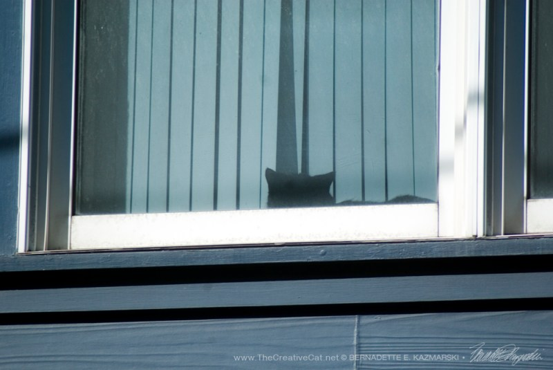 A black cat sleeping on the windowsill.