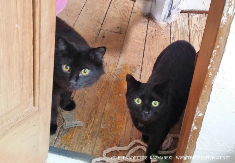 two black cats at doorway
