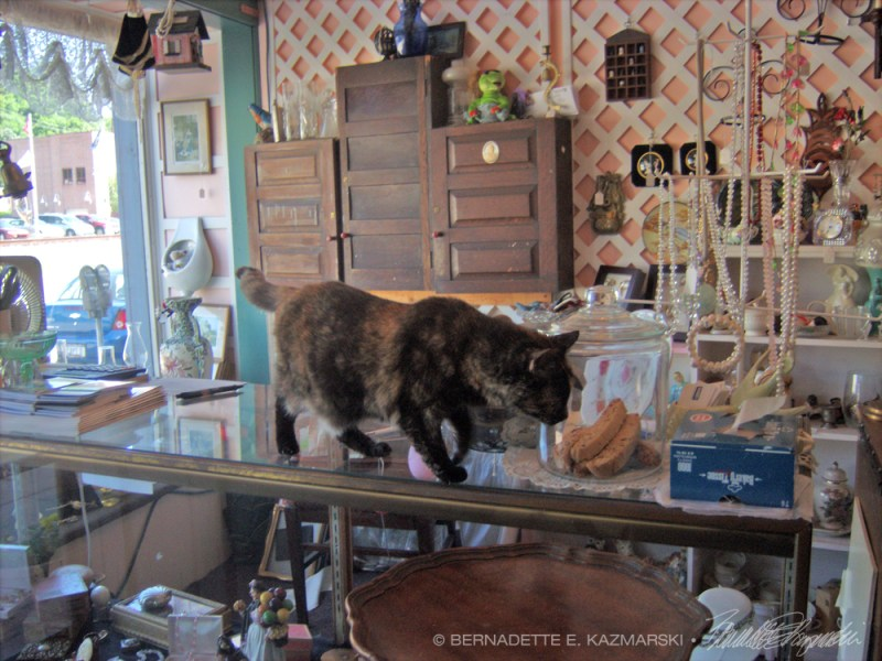 tortoiseshell cat on counter