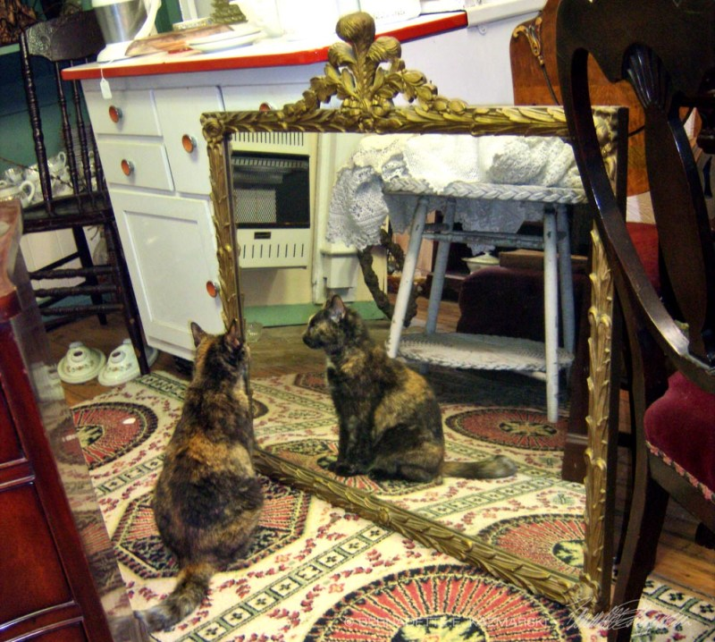 tortoiseshell cat looking in mirror