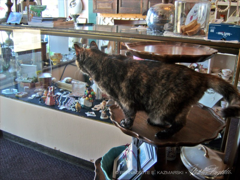 cat in shop