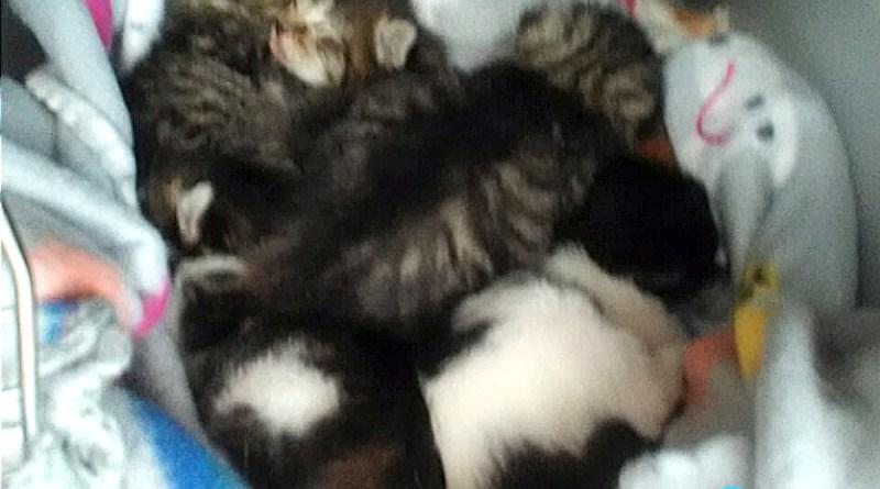 Callie's kittens.