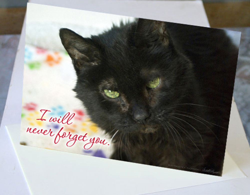 animal sympathy card with black cat