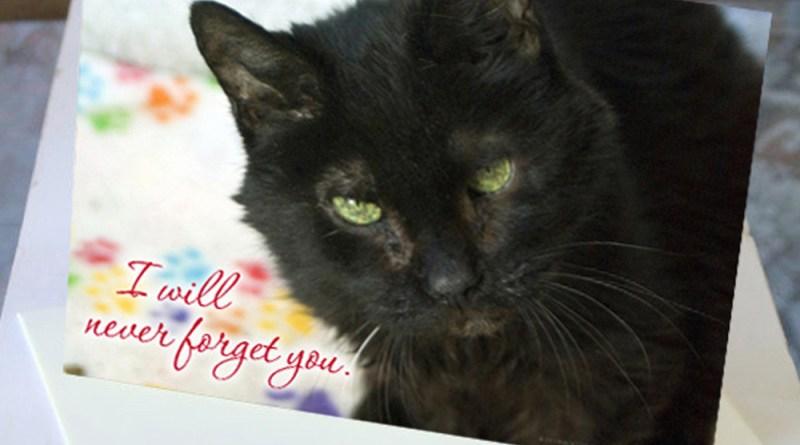 animal sympathy card with black cat