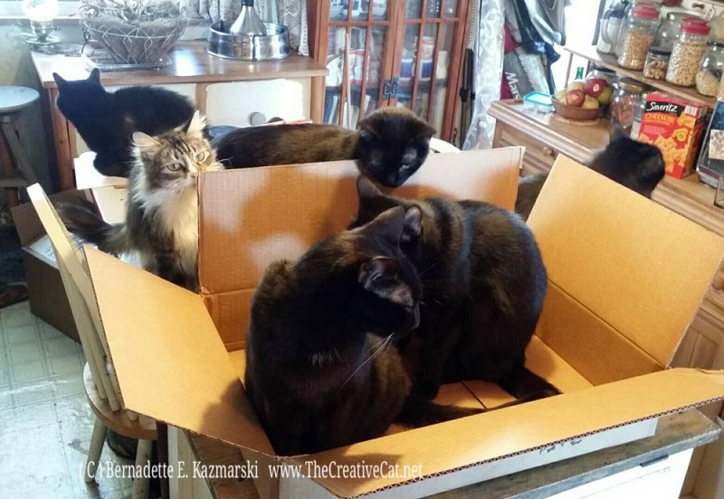 My new shipment of cats.