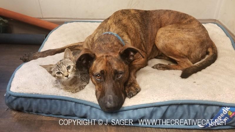 Cat Stevens with Waylon.