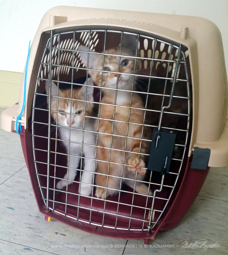 two orange kittens in carrier