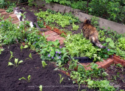 Namir and Cookie inspect my gardening.