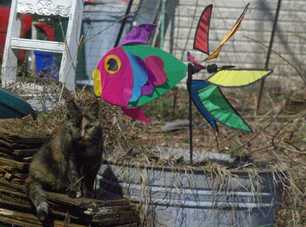 tortie cat with weatherfish