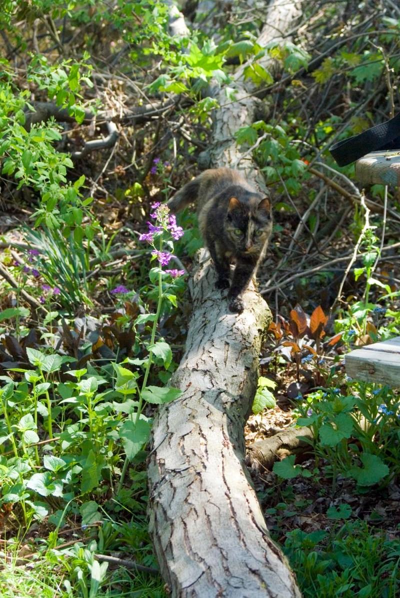 tortoiseshell cat on fallen branch