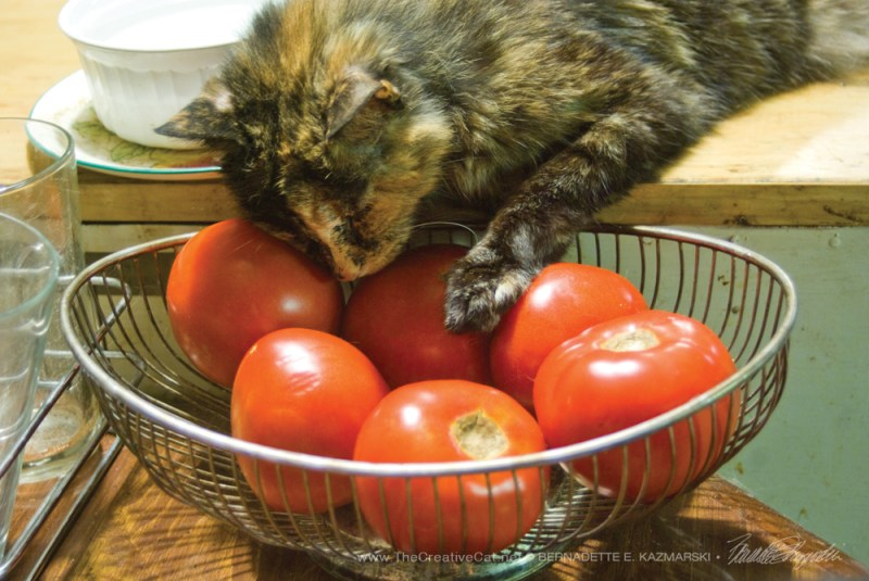 Tomatoes are a kitty's best friend.