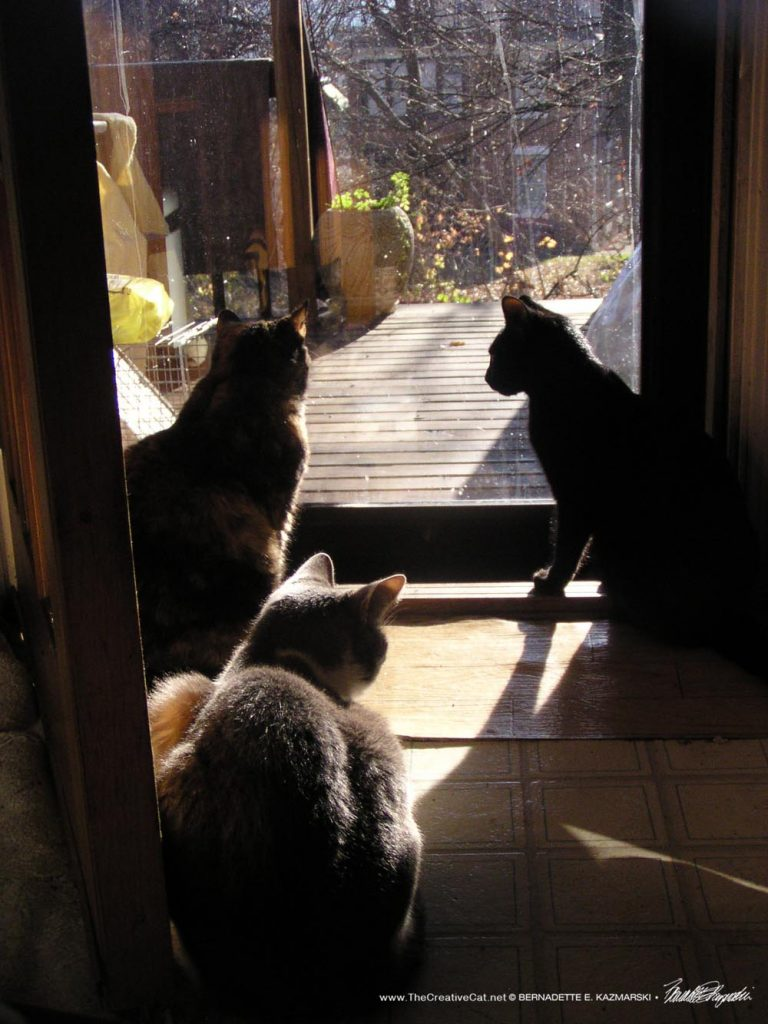 Cookie, Lucy, Namir, 2006
